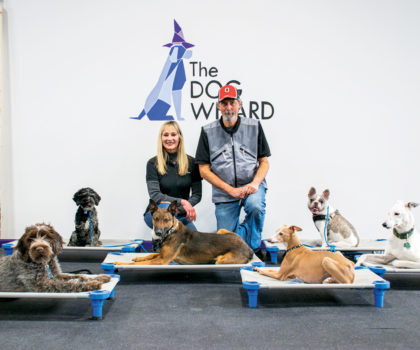 The dynamic duo at The Dog Wizard can teach any dog new behavioral tricks