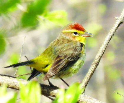 Lake Metroparks reveals the best spots to get a bird's eye view