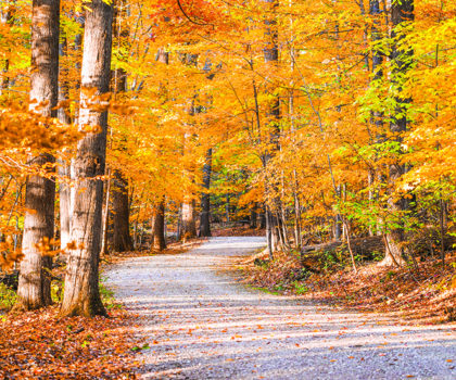 Here's where you can view the best in fall color