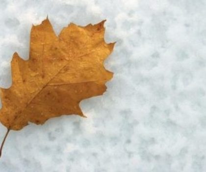 The etymology of fall