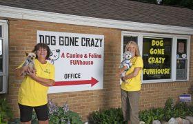 Dog Gone Crazy 2160 1