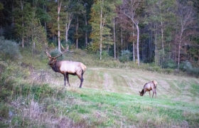 Medix Run Lodges Elk