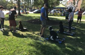 The Dog Wizard 6 Event3